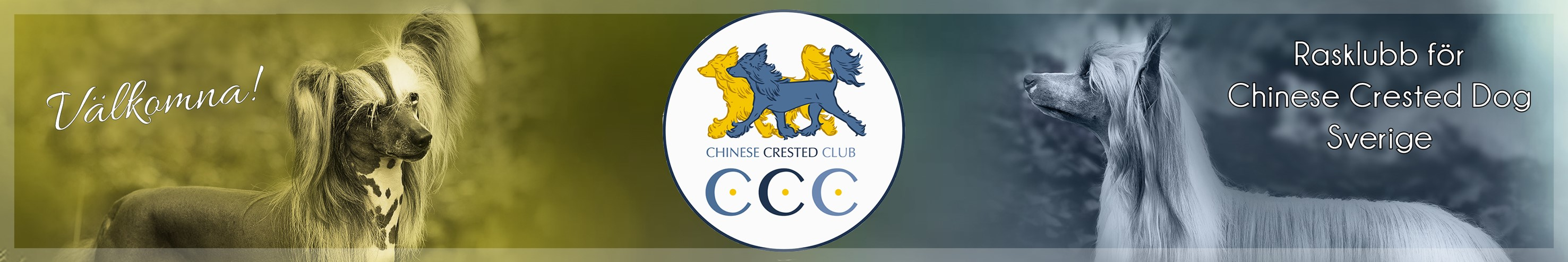Chinese Crested Club